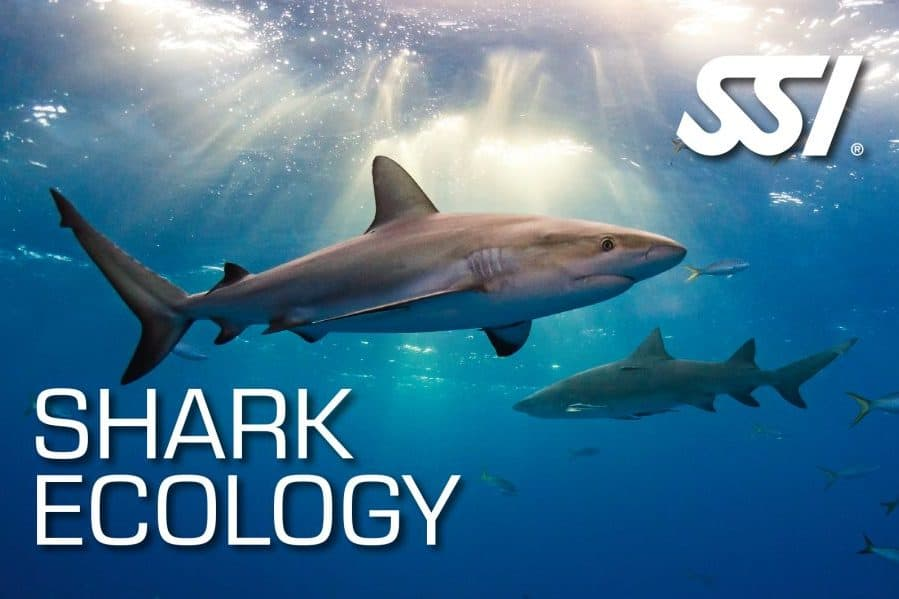 shark_ssi
